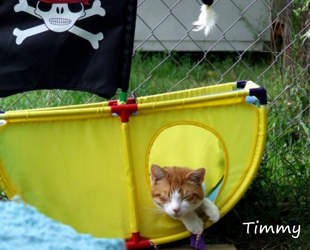 Timmy the Pirate