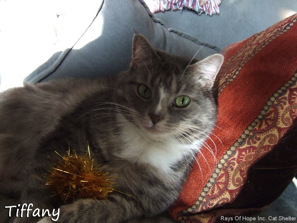 Tiffany Resting