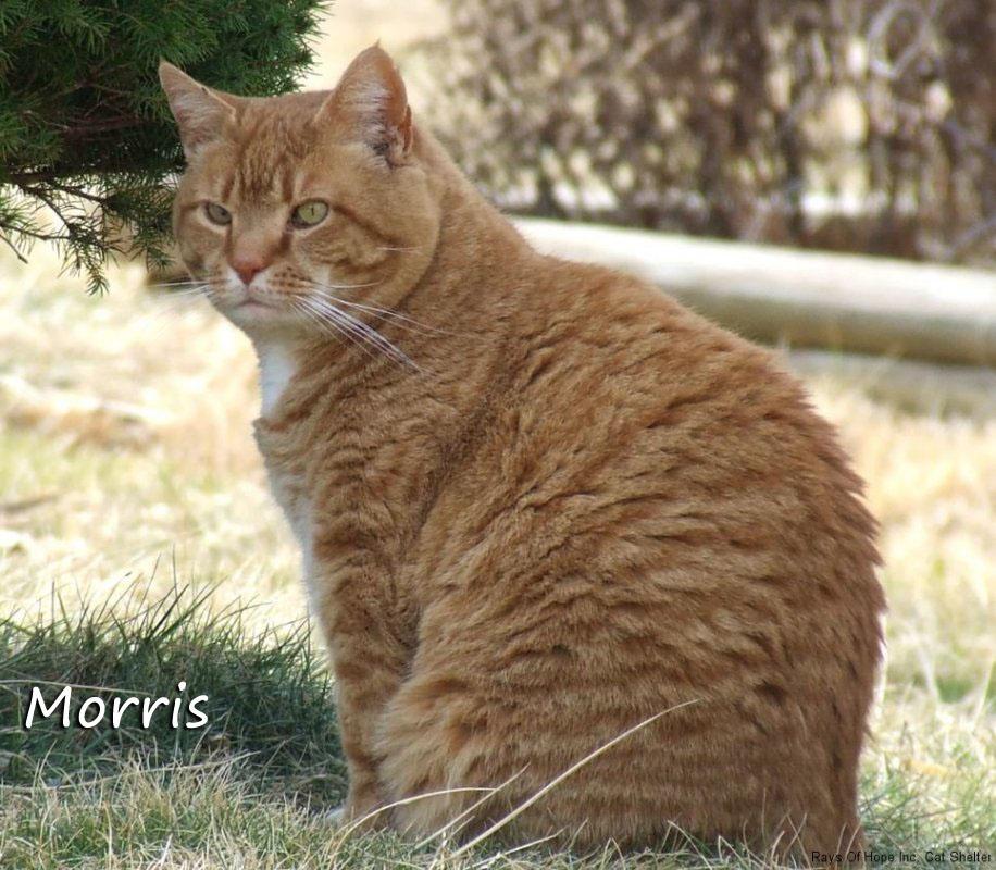 Morris Outside
