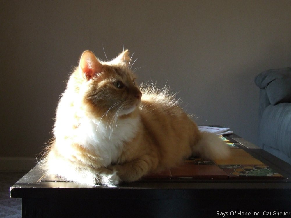 Simba in the sun